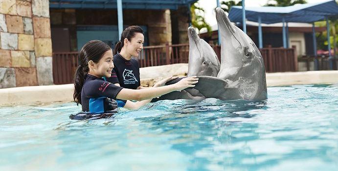 Dolphin Island3
