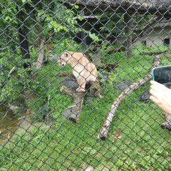 阿西尼博因公園動物園用戶圖片