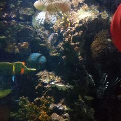 샤먼 해저세계 여행 사진