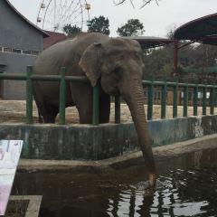 홍산삼림동물원 여행 사진