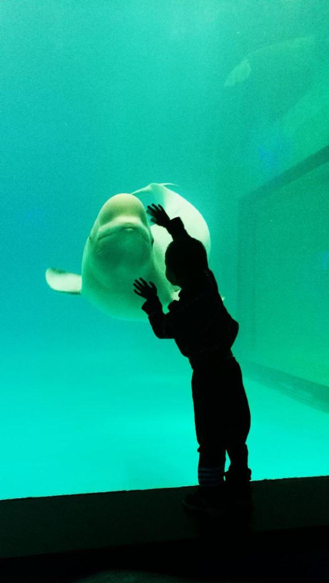 Grandview Aquarium