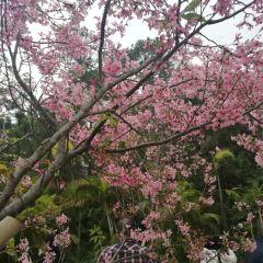 Jinshan Forest Park User Photo