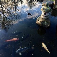 Holland Park User Photo