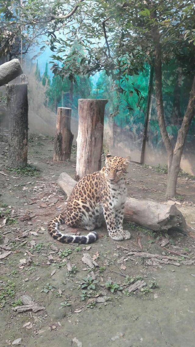 成都動物園