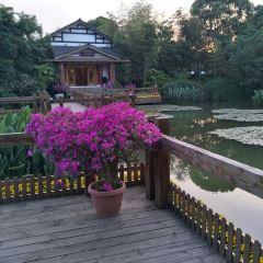 Shisi Garden User Photo