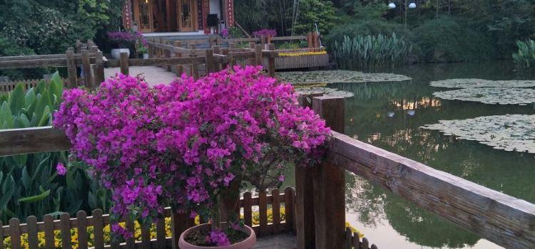 Shisi Garden2