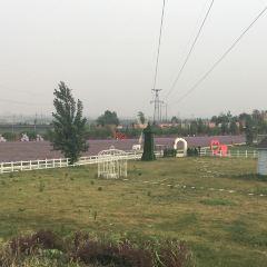 紫海芳庭熏衣草莊園用戶圖片