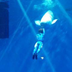 新華聯大白鯨海洋公園用戶圖片