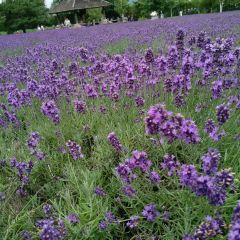 Farm Tomita User Photo