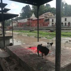 Pashupatinath Temple User Photo