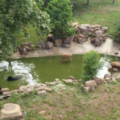 合肥野生動物園用戶圖片