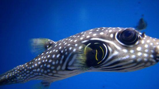 Wuxi Aquarium
