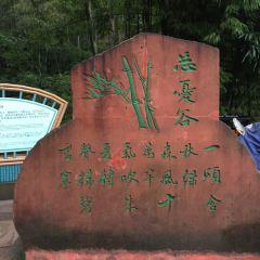 "Shunan Zhuhai (""South Sichuan Bamboo Sea"") National Park User Photo"