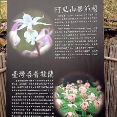 臺大山地實驗農場(梅峰)用戶圖片