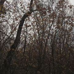 森林公園用戶圖片