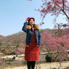신펑잉화위 여행 사진