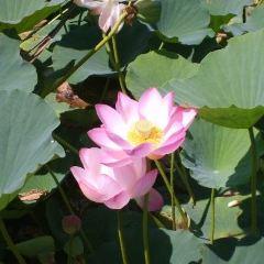 蓮花泡風景區用戶圖片