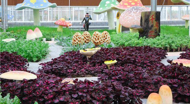 洋河農業嘉年華3