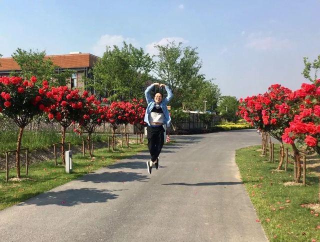 打卡上海薰衣草節的100+個理由!這兒有一份超全遊園總攻略等你查收!