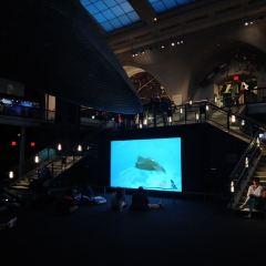 Blue Whale用戶圖片