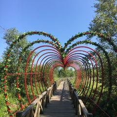 大石頭亞光湖國家濕地公園用戶圖片