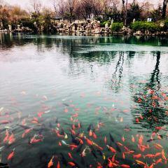 Five Dragon Pool User Photo