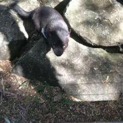 Wild Life Sydney Zoo User Photo