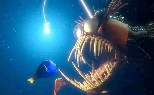 這條魚躺著也中槍,就因為太醜連王思聰都吐槽!