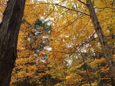 Jiguan Hill Forest Park of Xichou