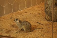 MyZoo麦族室内动物观赏乐园-南宁-AIian