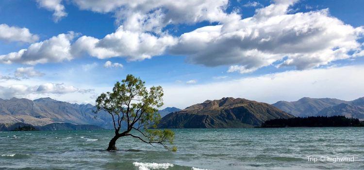 That Wanaka Tree3