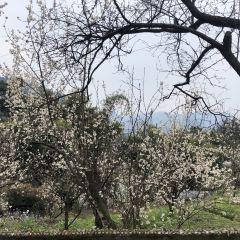 官帽山櫻桃園用戶圖片