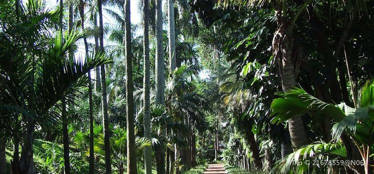 Durban Botanical Gardens3