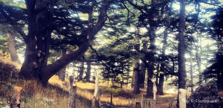 The Cedars of God