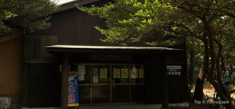 屋久島海龜博物館2