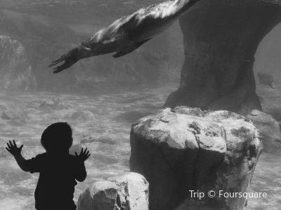 Fresno Chaffee Zoo