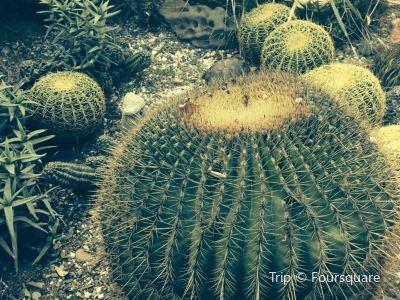 Obesa Cacti Nursery