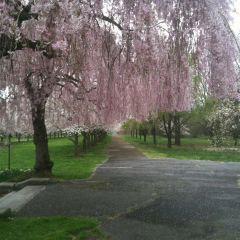 費爾芒特公園用戶圖片