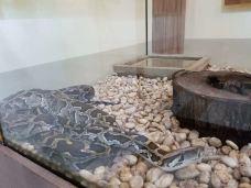 毒蛇研究中心-普吉岛-CD云上