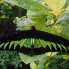 쿠알라룸푸르 나비공원 여행 사진