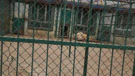 棋盤山森林野生動物園遊樂場