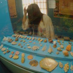 Palawan Museum User Photo