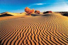 塔克拉玛干沙漠(巴音郭楞)-巴音郭楞-jyh1363