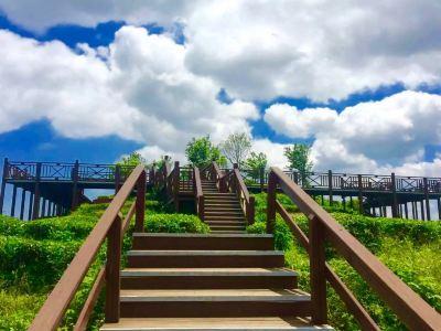 屏山生態茶園