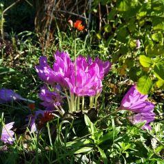 Shichiku Garden User Photo