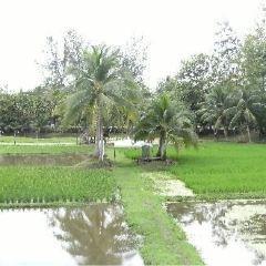 Laman Padi Langkawi User Photo