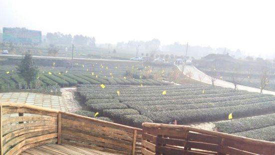嘉竹綠茶園