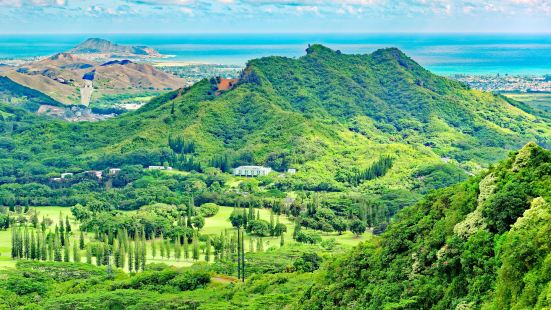 Nuuanu Valley Rain Forest