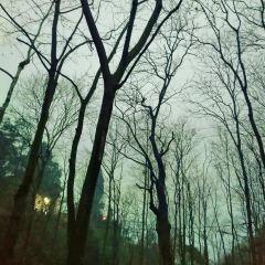 Baiyunyan Sceneic Area User Photo