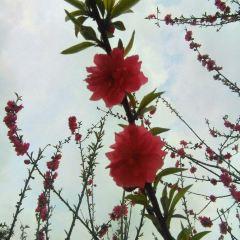 Wutong Mountain Park User Photo
